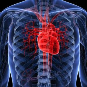 Enfermedades estructurales del corazón